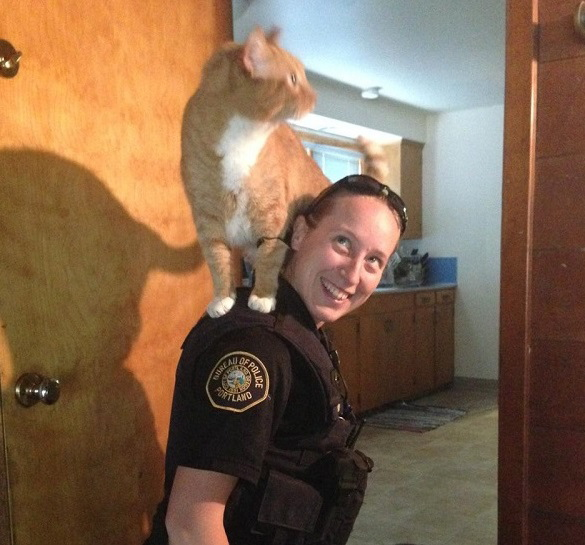 Cat perches on officer's shoulders as home burglary is investigated